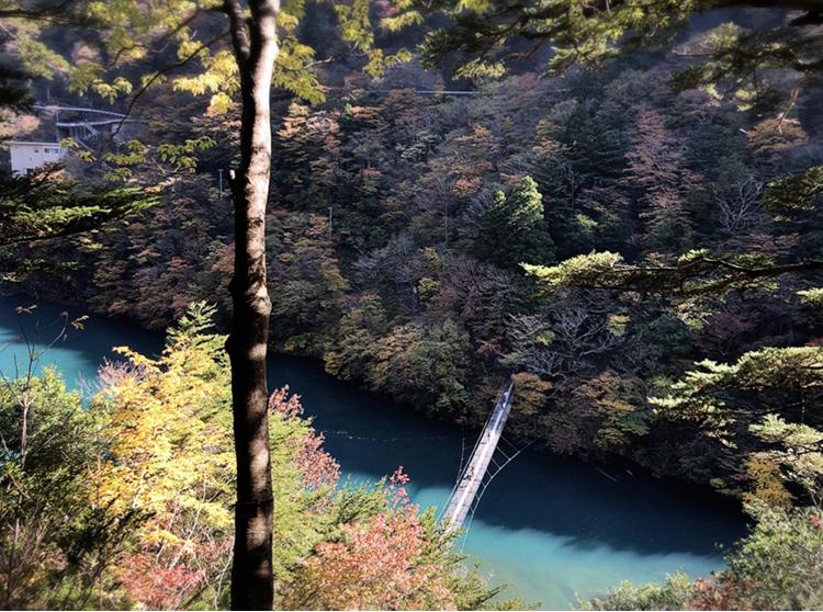 【#静岡】《夢の吊り橋×秋・紅葉》美しすぎるミルキーブルーの湖と紅葉のコントラストにうっとり♡湖上の吊り橋で空中散歩気分˚✧₊_10