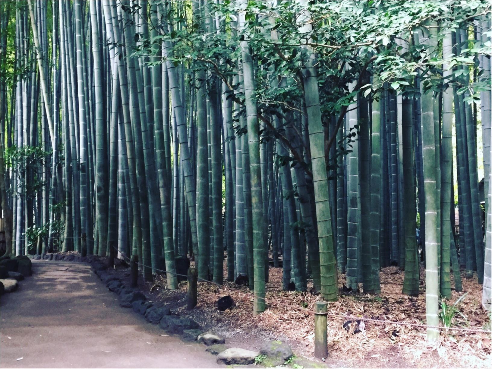 【✨着物レンタルwargo ¥2,900✨】手ぶらでOK!着物を着てお出掛けしよう❤︎鎌倉の「報国寺の竹林」「浄妙寺」「小町通り」を散歩しました♩≪samenyan≫_15