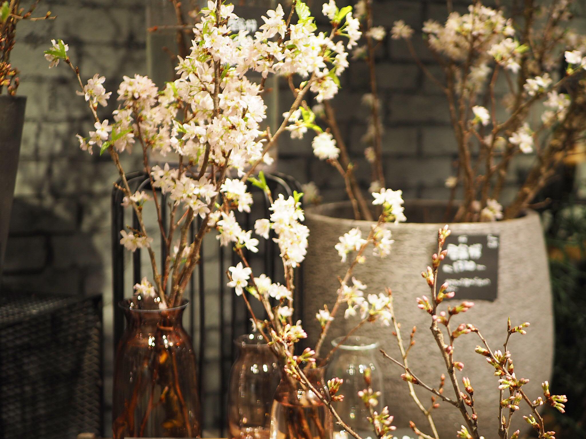 【おうちでお花見♡】AOYAMA FLOWER MARKETの桜が咲きました♩_9
