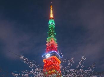 『グッチ』が3/26(金)限定で東京タワーをライトアップ。お花見気分を味わって!