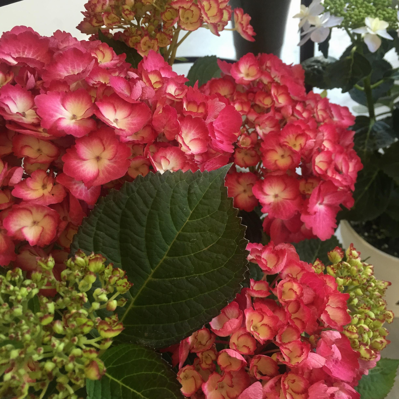 お花屋さんでランチを♩カフェとお花屋さんが一つになったポーズカフェ♡_1