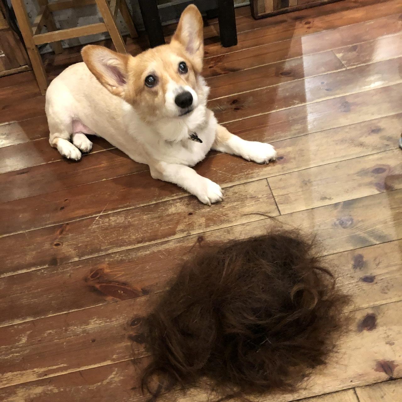 行かなきゃ損!【1日10組限定】幸運が舞い降りる美容室で髪切ってみた_2
