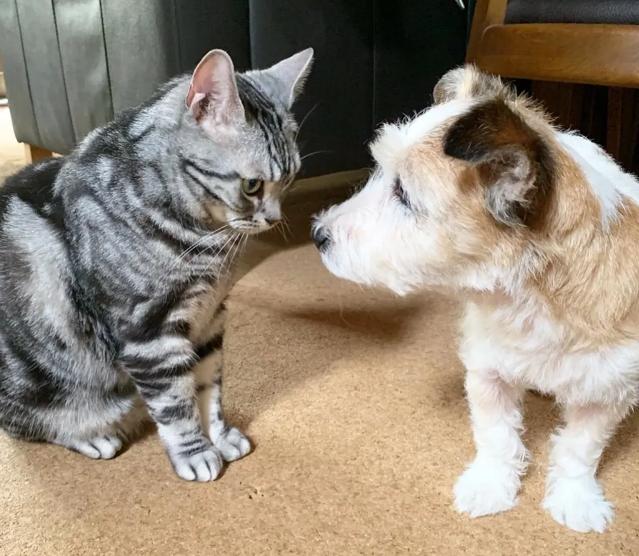 犬・チャラちゃんをにらむ猫・ソラくん