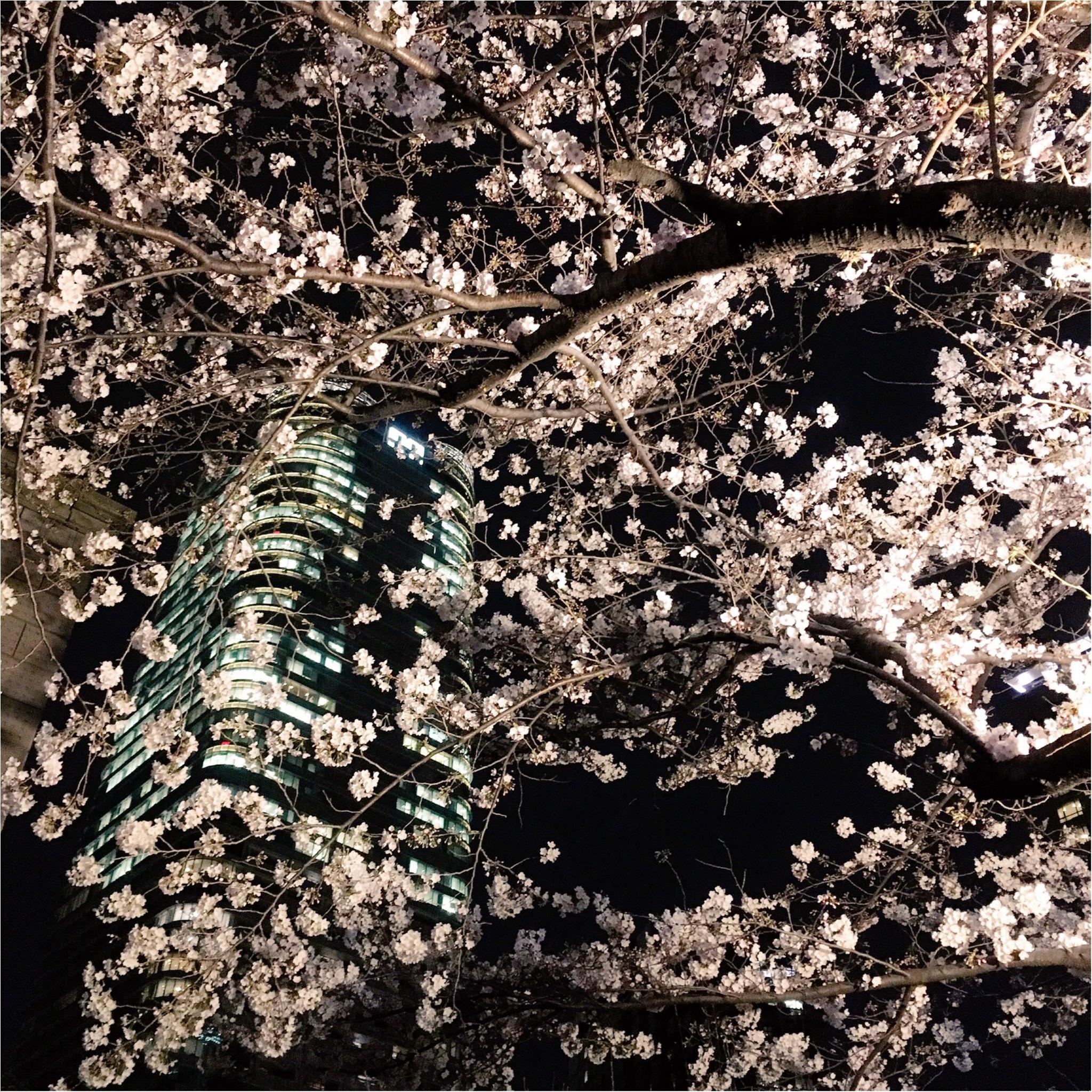 夜桜はしごしました♡六本木〜千鳥ヶ淵_5