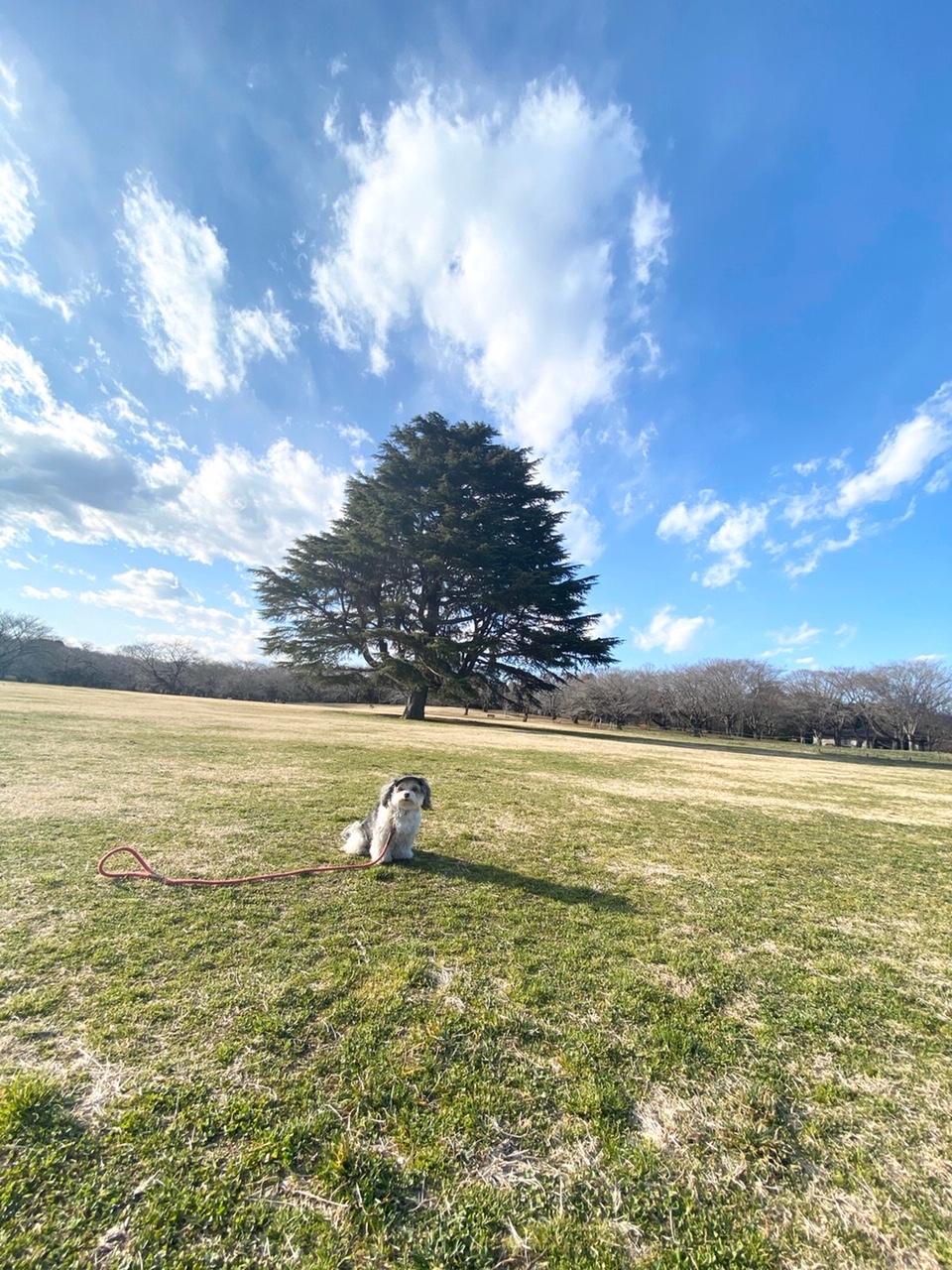 【今日のわんこ】太郎くん、広々とした公園で遊びまわった日の1枚_1