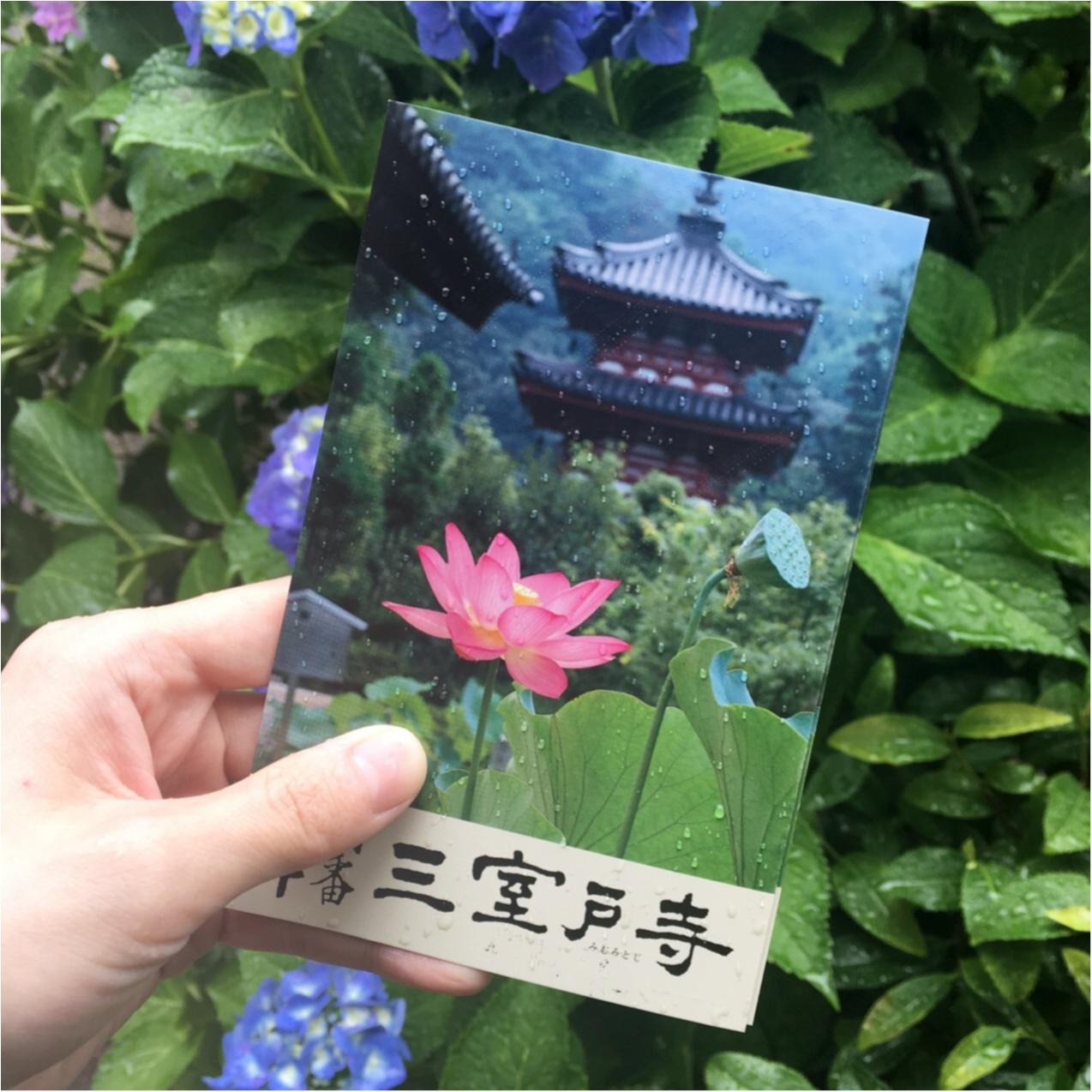 梅雨の時期に見たい♪紫陽花の名所へおでかけ…*見つけたハートの紫陽花♡_2