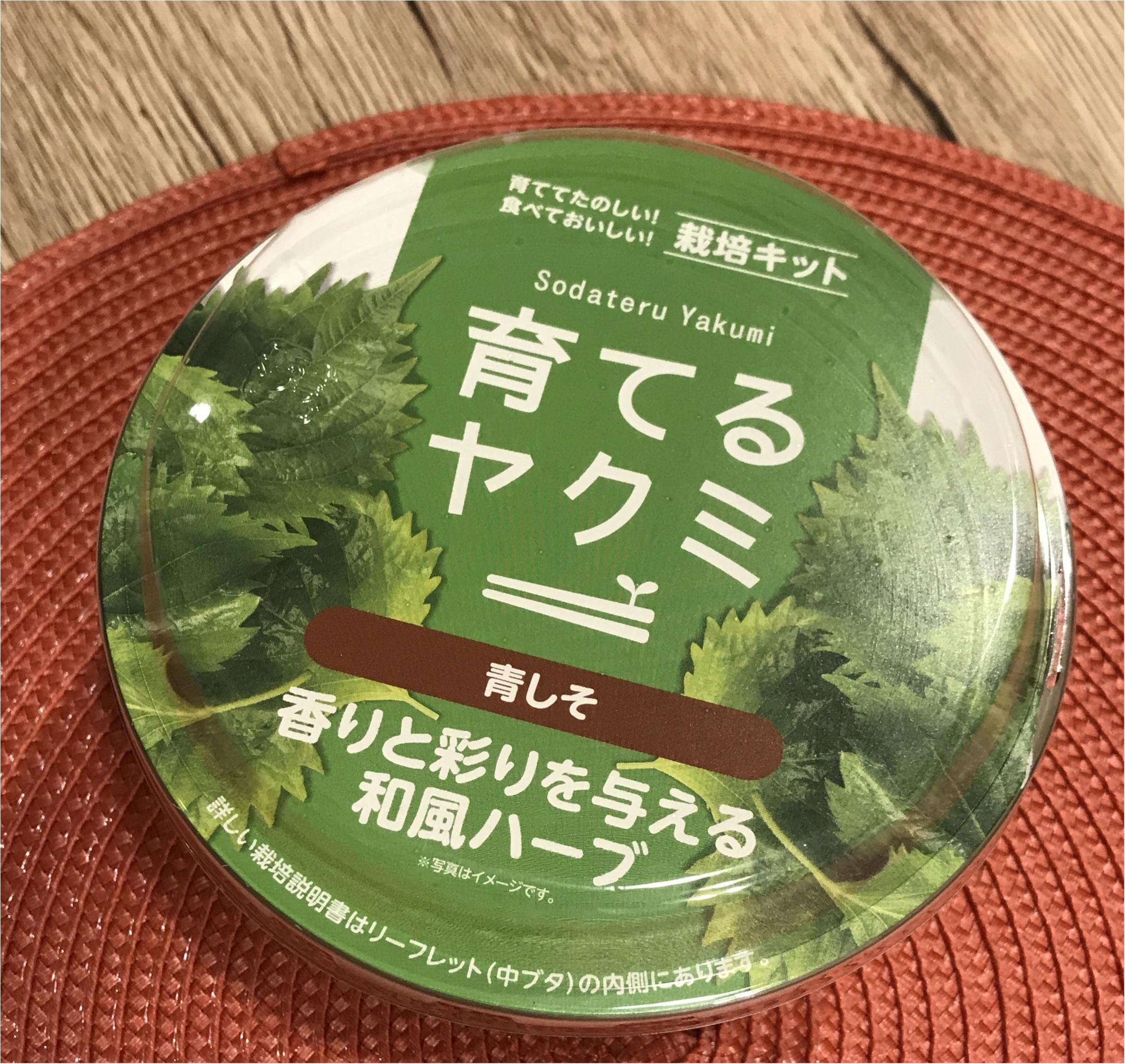 【life】コンビニで売っていた〇〇を試してみます!プチ家庭菜園デビュー!!_1