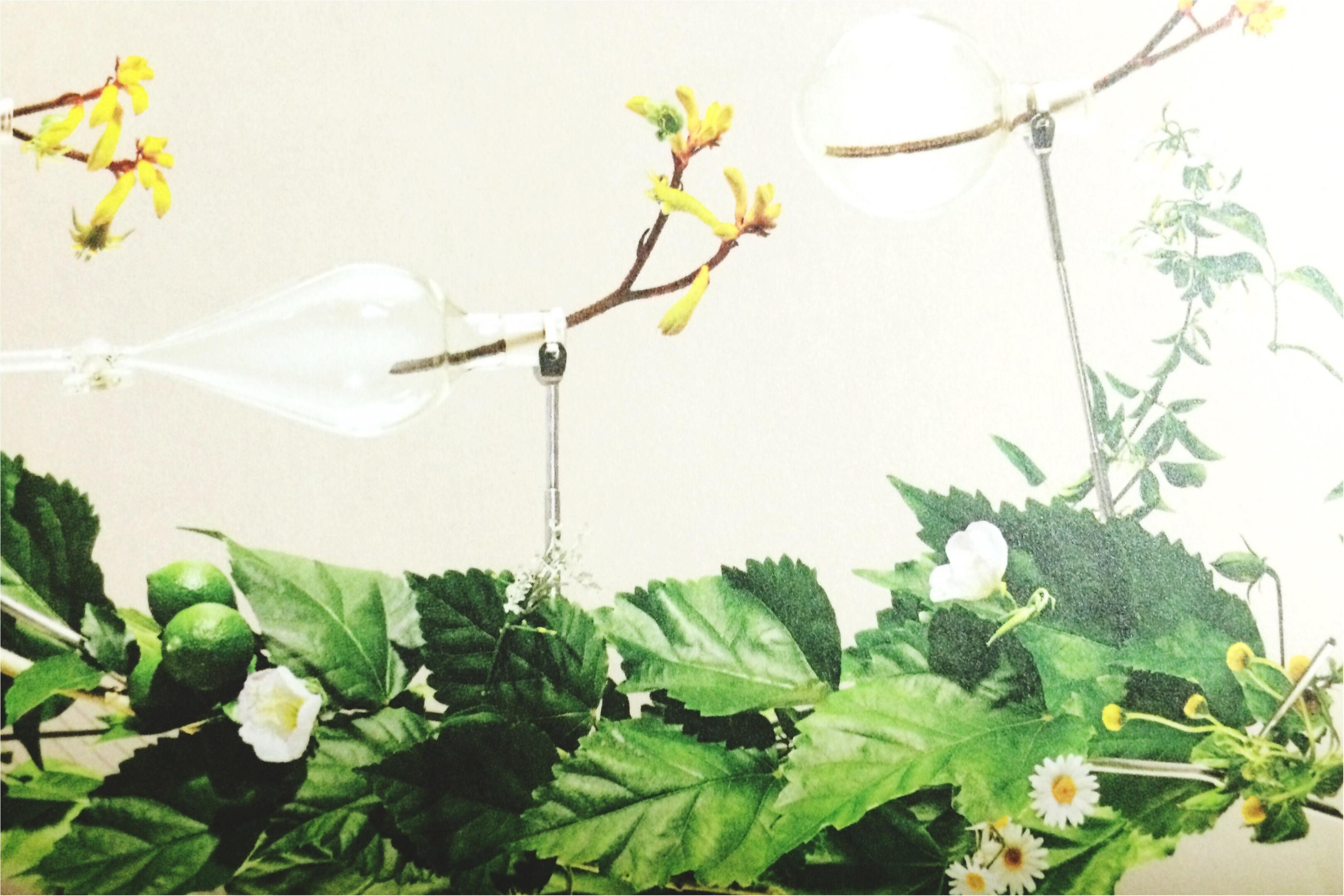 【*COSMETIC*】癒しのオーガニックコスメ〜ローズの香り_4