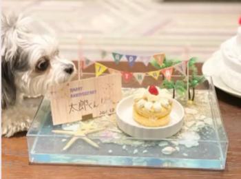【今週のわんこ】太郎くんが9歳に! お誕生日を海辺でお祝い