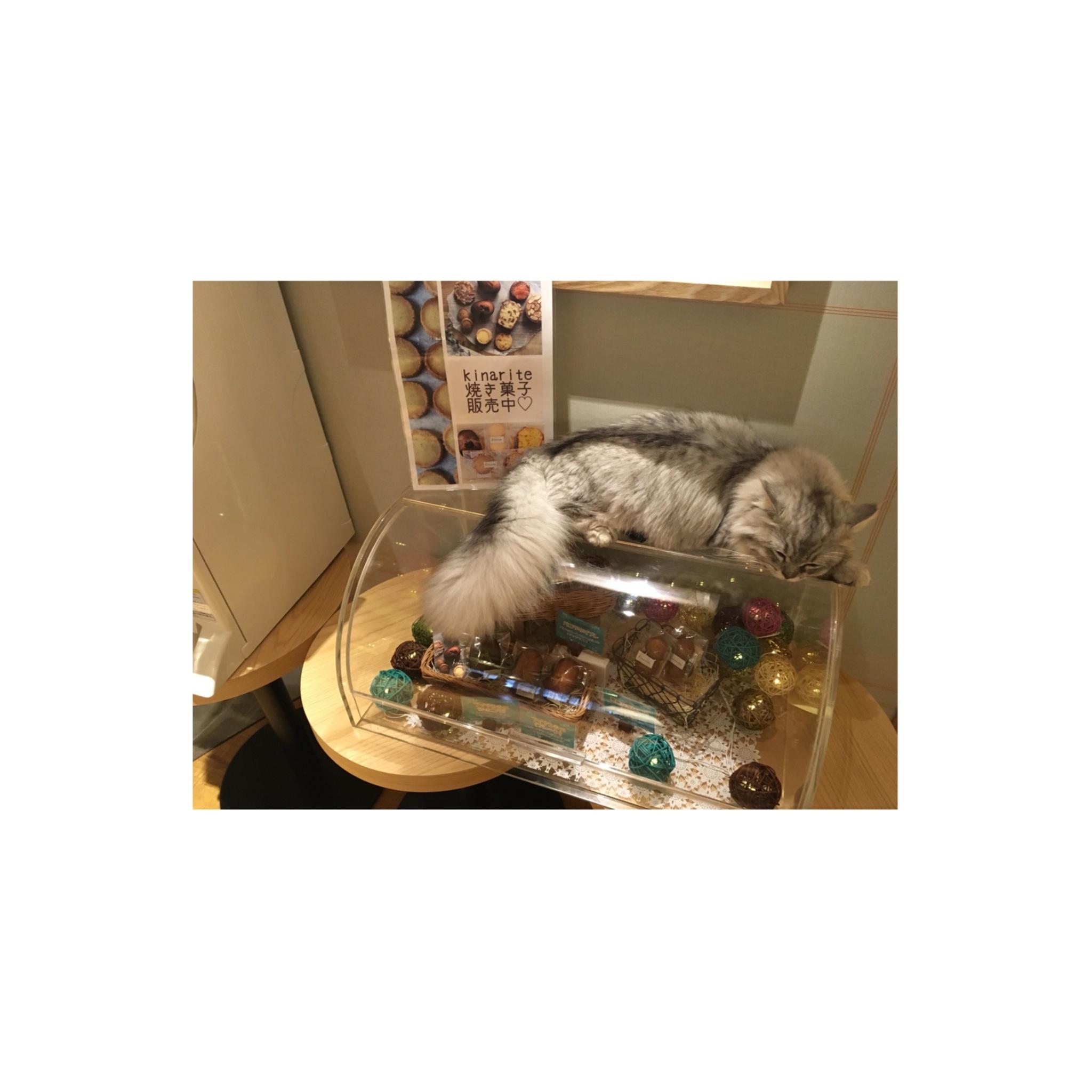 【GWはここで決まり!】日本最大級の猫カフェが新宿に⁈オシャレなラウンジカフェで可愛い猫たちに癒される!_6