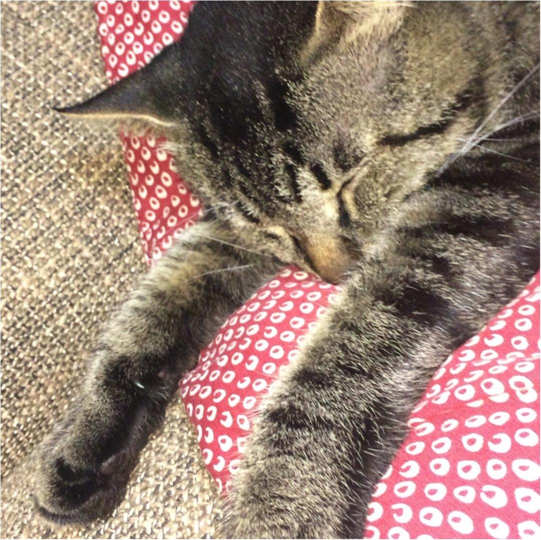 今日は世界猫の日♡_2