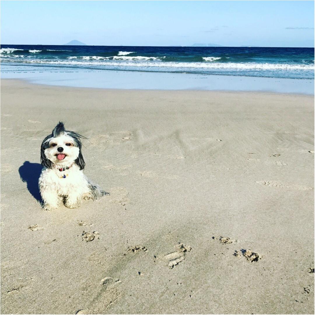 【今日のわんこ】夏はやっぱり♡♡ 海にやってきた太郎くん_1