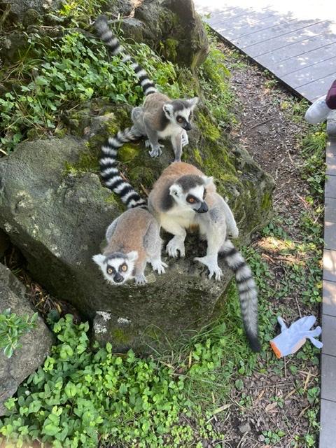 ヒルナンデスでも紹介!伊豆シャボテン動物公園で動物達と沢山触れ合える!_6