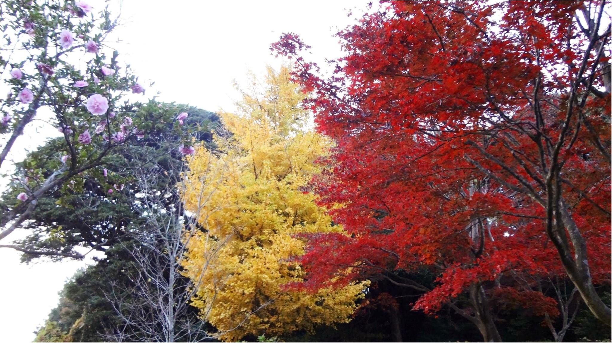 鎌倉にも紅葉の季節がやってきた♡11/20時点で見頃のオススメ紅葉スポットをご紹介✨≪samenyan≫_8