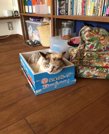 【今日のにゃんこ】いつだって入ってます♡ 生粋の箱入り娘・ゆきちゃん_1