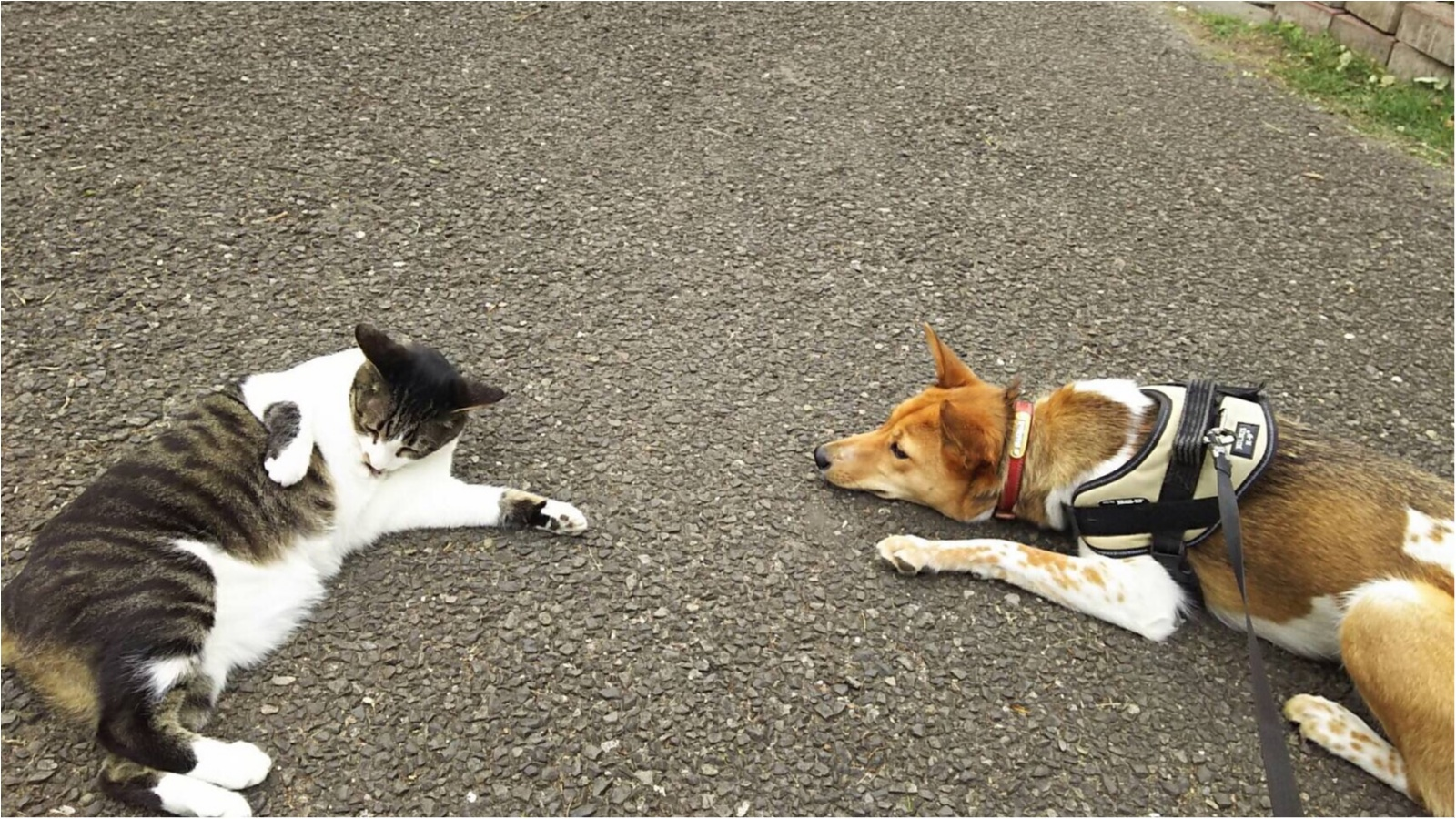 【今日のわんこ】急接近♡ にゃんこLOVE犬・こだまちゃんに、初めての猫友が!?_1