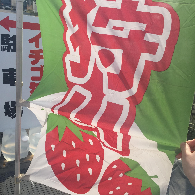 【電車&徒歩で行ける!いちご狩り】横浜駅から電車で26分&徒歩8分✨4品種のいちごが楽しめる農園をご紹介!≪samenyan≫_2