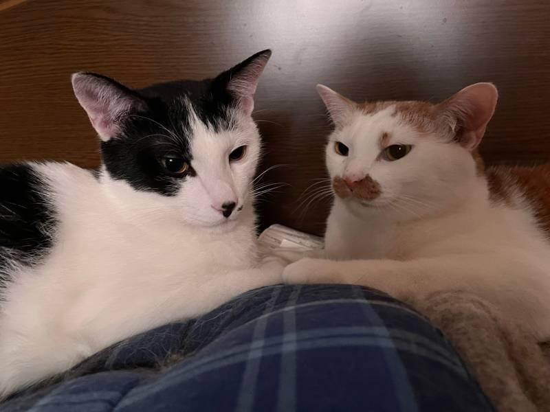 ベッドの上にいる猫・ルウくんとラビくん