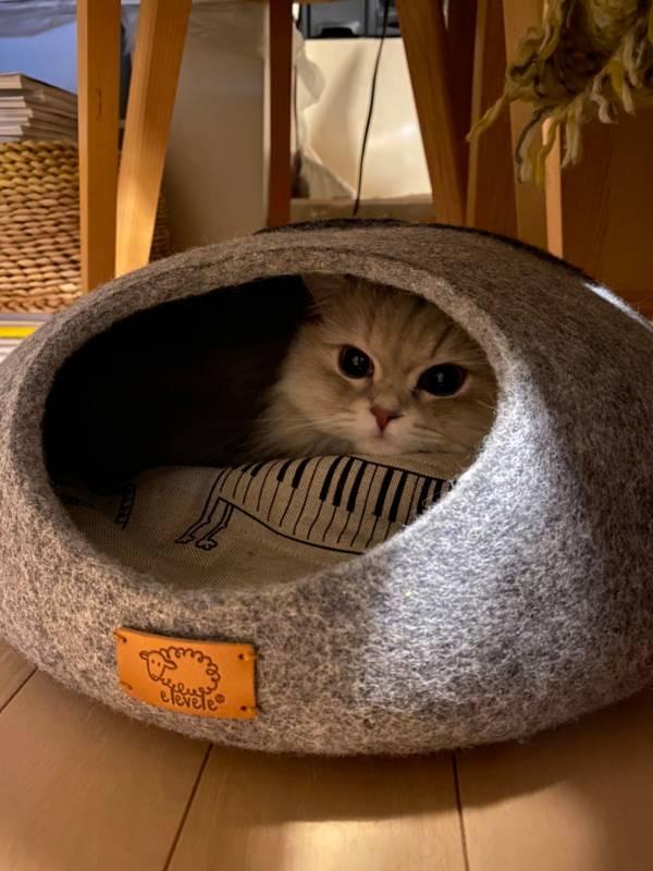 新しいベッドでくつろいでいる猫・ココンちゃん