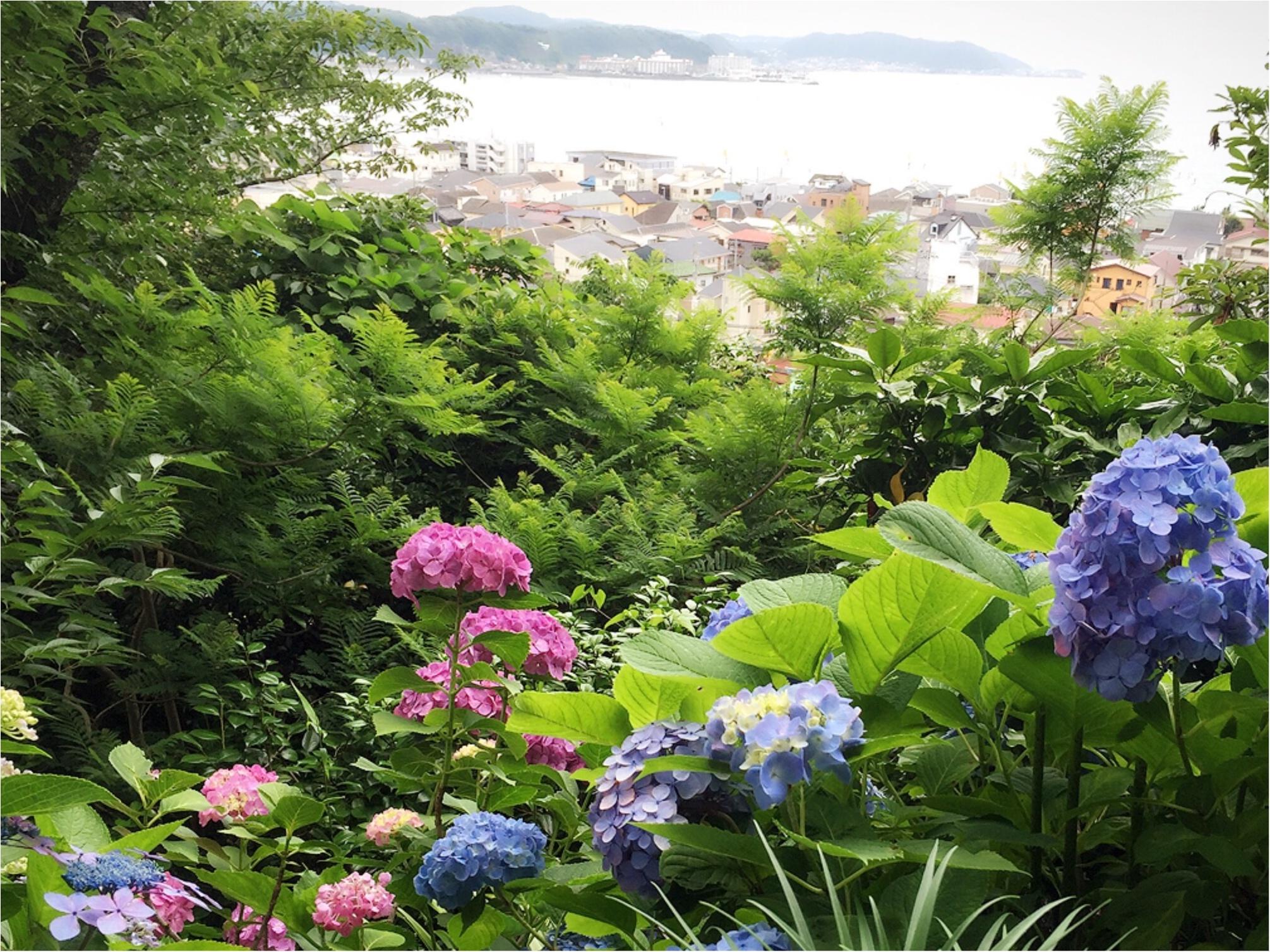 週末鎌倉さんぽ。今が見頃!紫陽花を見に長谷寺へ行ってきました♡*_5