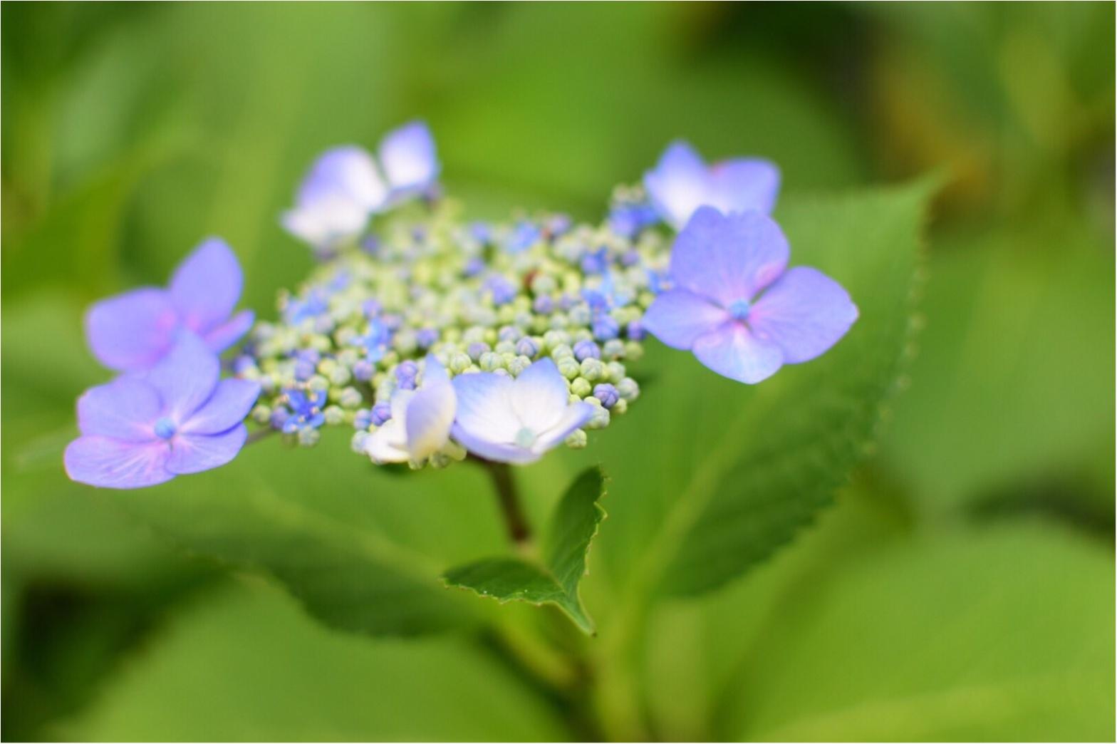 【京都】紫陽花を探しに東福寺へ、、思わぬ絶景に感動♡_1