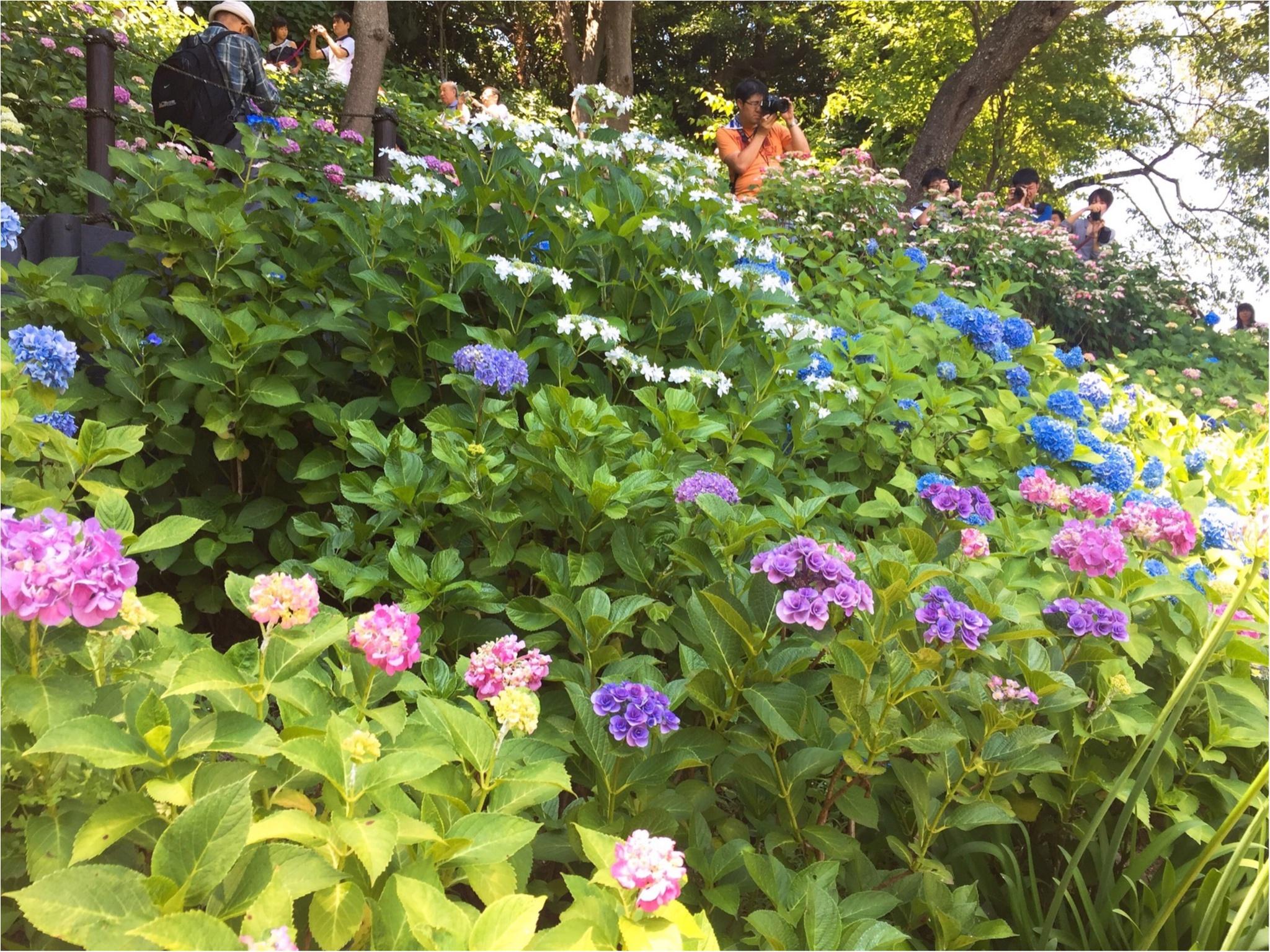 【鎌倉・長谷寺】紫陽花が見頃!待ち時間にオススメのランチスポットをご紹介♡_9