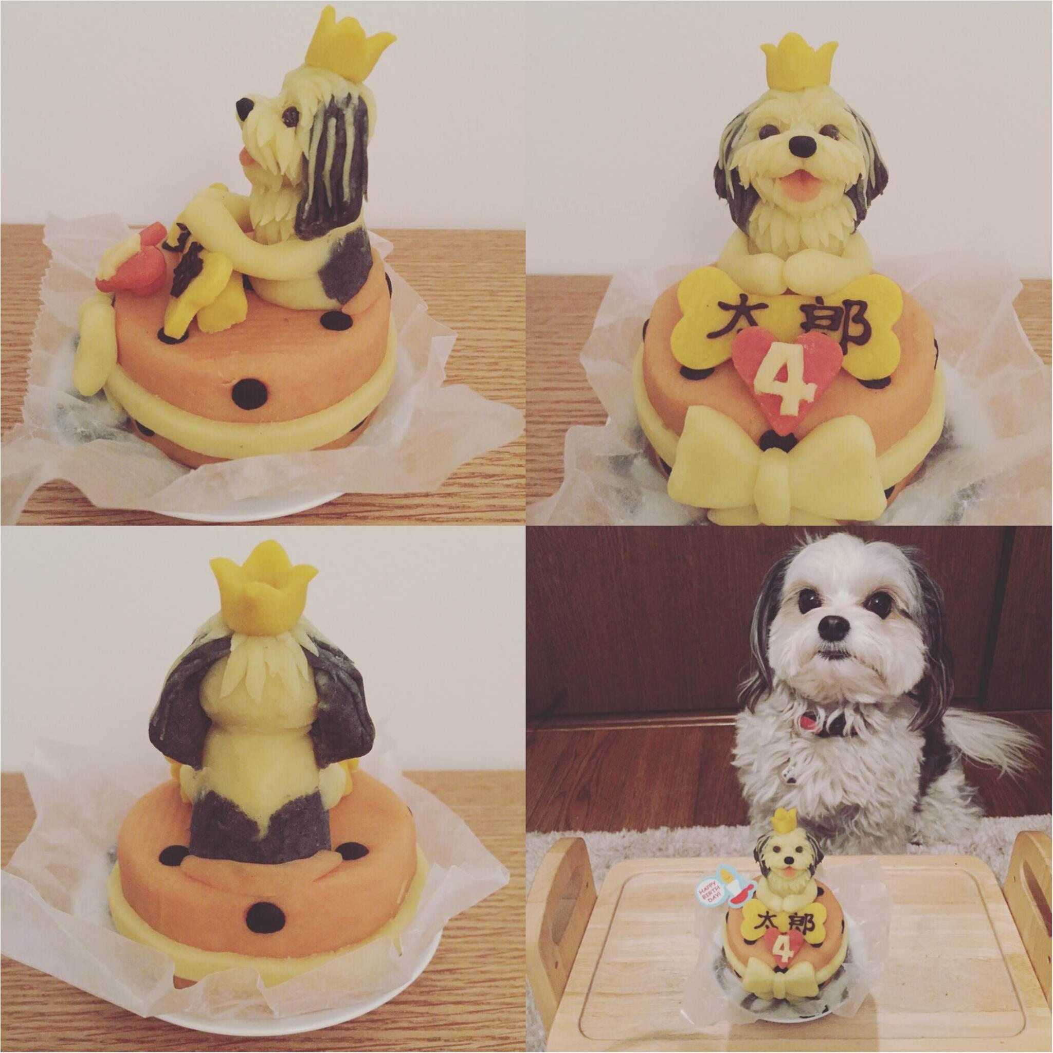 【今日のわんこ】お誕生日は特製ケーキで♡ 4歳になった太郎くん♡ _1