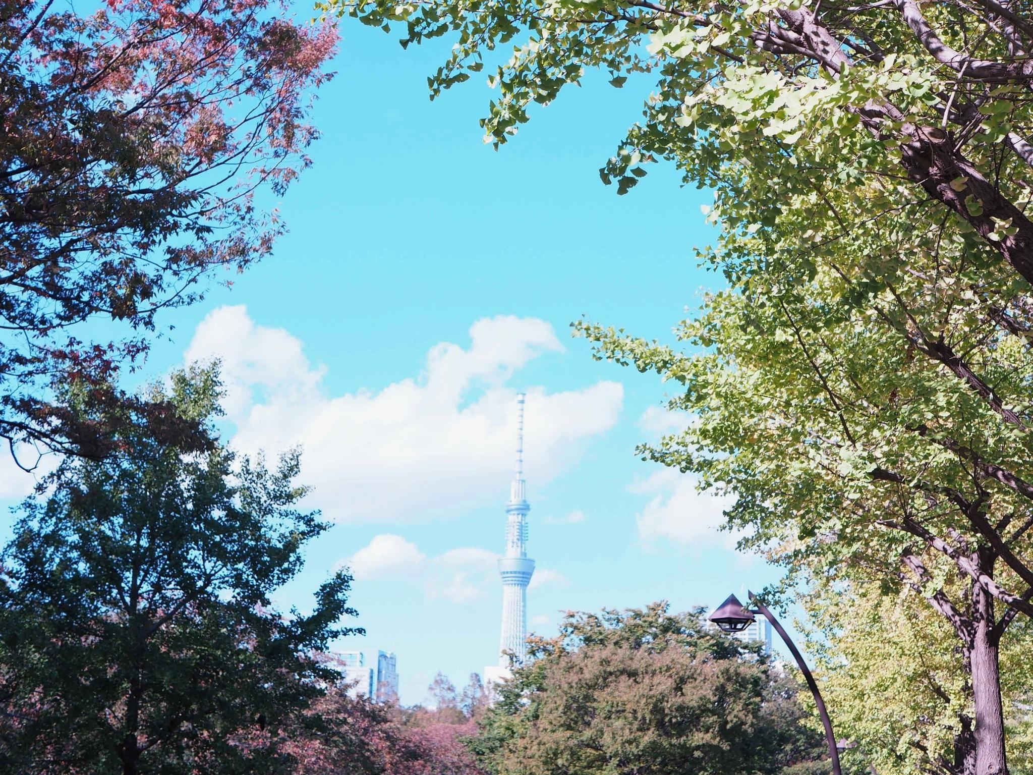 【都内サイクリング♩】秋晴れの日に #ドコモ・バイクシェア でお出かけしてみた♡_3