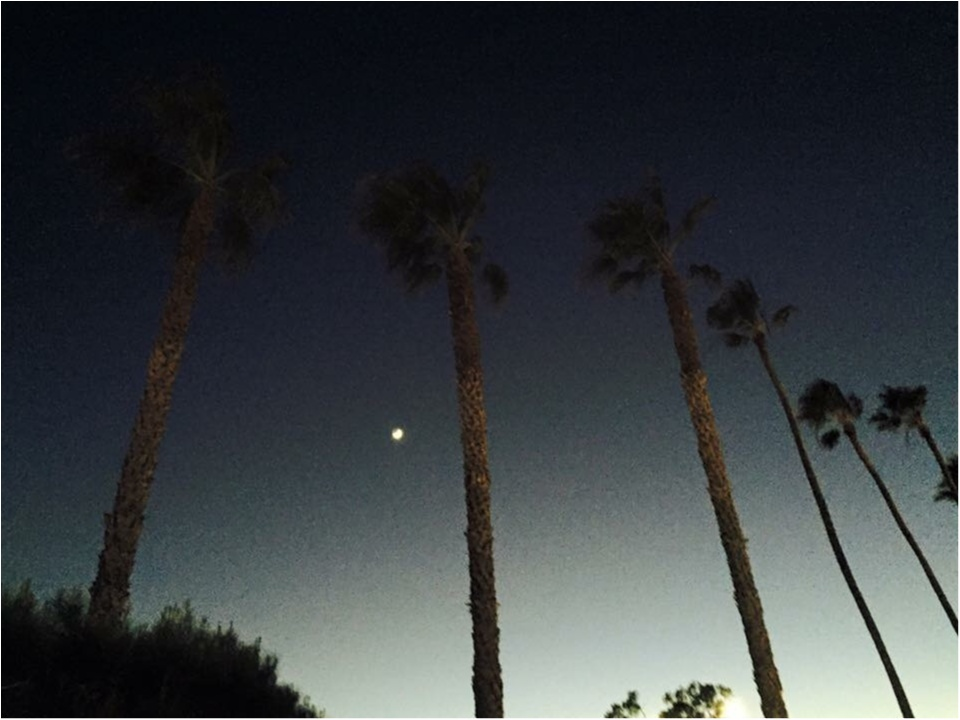写真でも、きっと伝わるこの魅力✨朝から晩まで眺めた《*ロサンゼルスの広い空*》_13