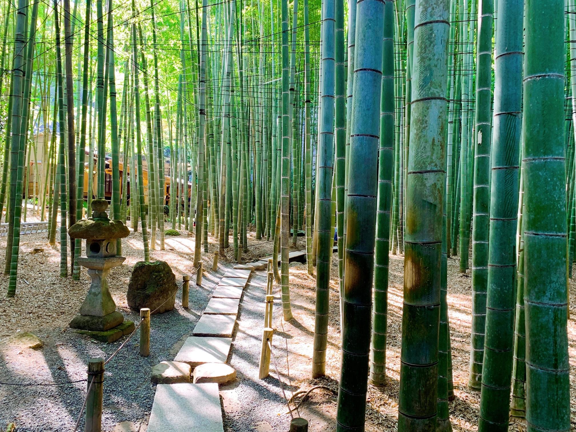 【女子旅におすすめ】神奈川《鎌倉》静かに自然を感じる癒しスポット4選♡_1