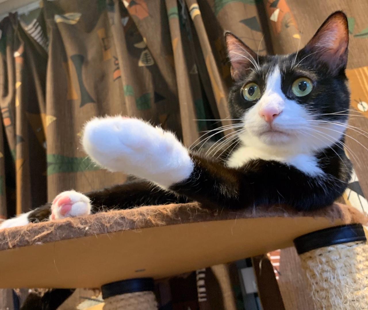ピンポンの音にビックリする猫・ルウくん