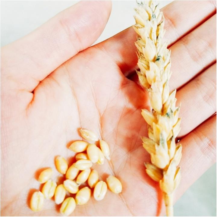 メロン、うに、かに、ほたてといえば?(笑) 小麦研修&グルメ旅【#モアチャレ 農業女子】_4