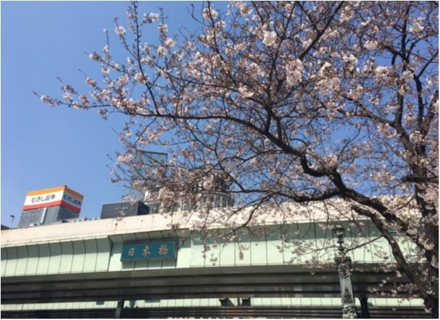 【桜通信】週末で散っちゃう!?最近の桜事情_6