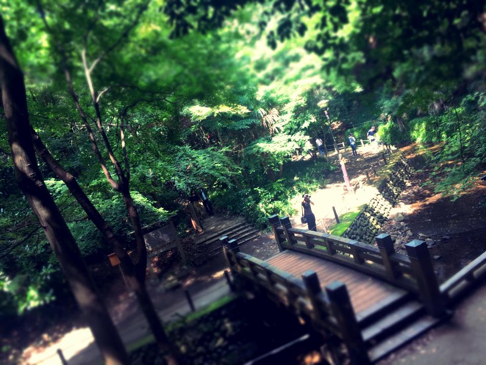 【癒しスポット】東京のオアシス。仕事に疲れたときは森林浴でリフレッシュ!_11