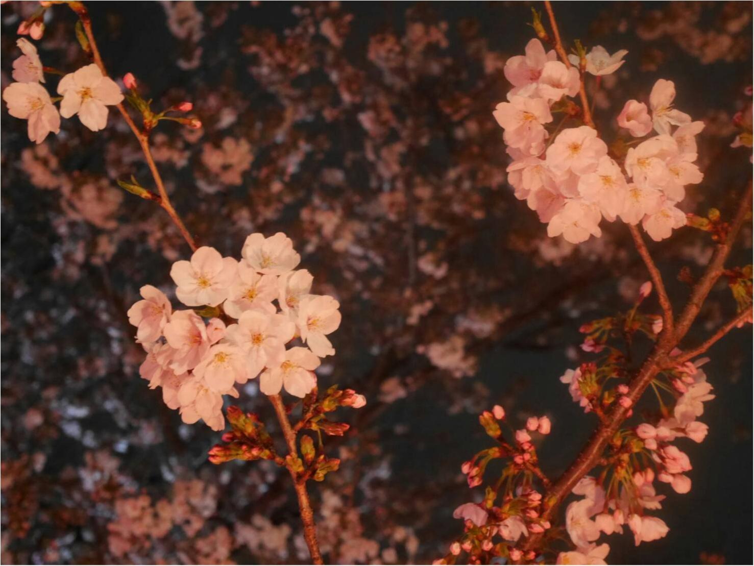 花より団子!≪恵比寿にある白熊で有名な「JAPANESE ICE OUCA」の今の時期だけ食べられるお団子≫ _1
