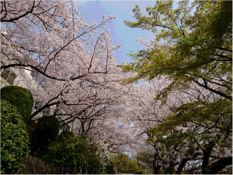 ご当地・穴場お花見スポット<大阪・池田>_7