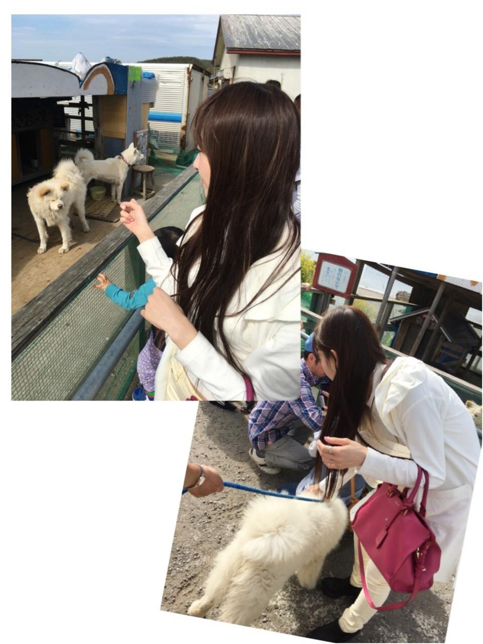 【ブサカワ犬わさお】に会える方法♡モアハピ◡̈のぞみ♡_8