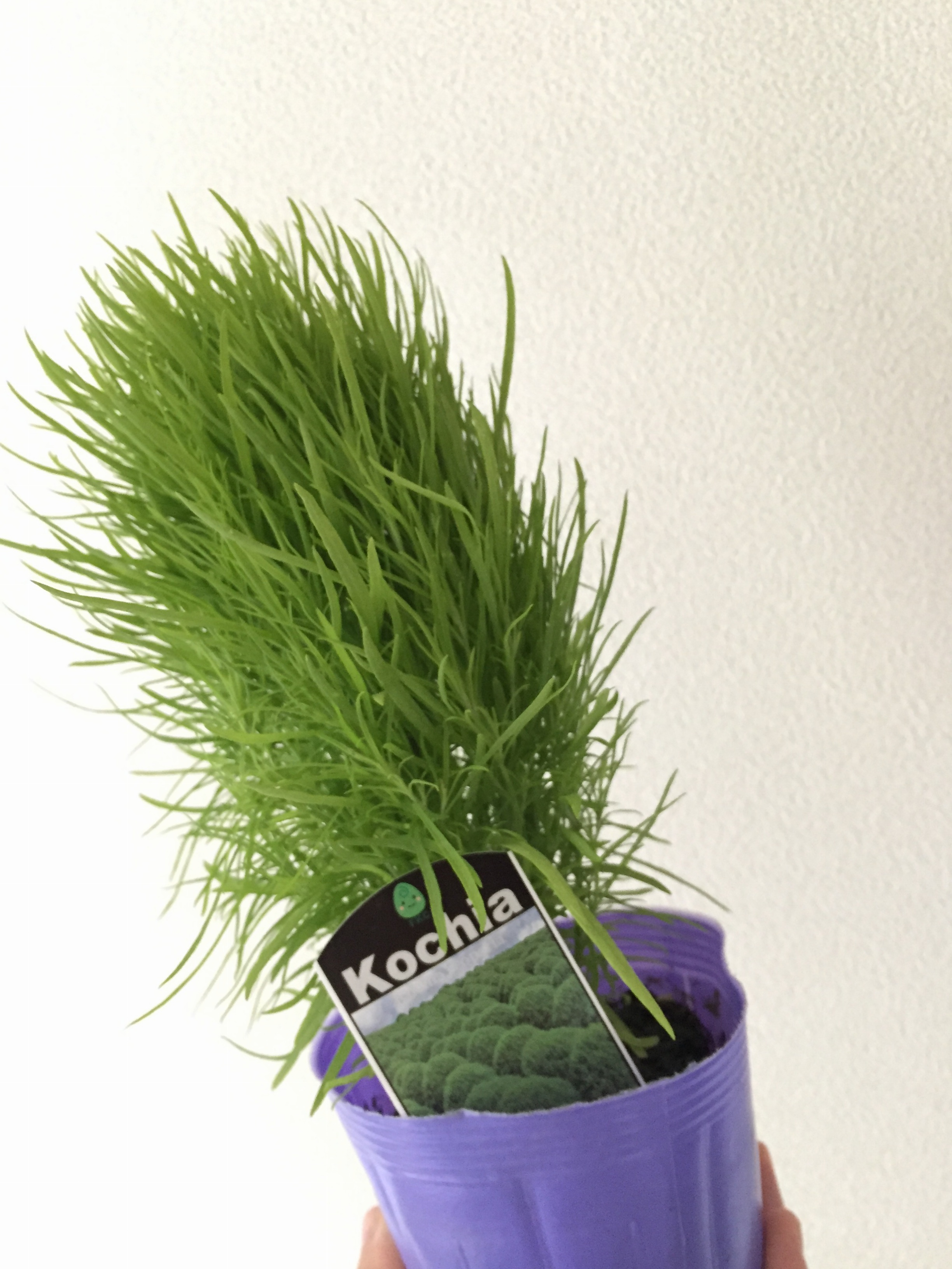 …ஐ 花のある暮らし♡おうちにグリーンを取り込んで安らぐ空間づくり ஐ¨_1