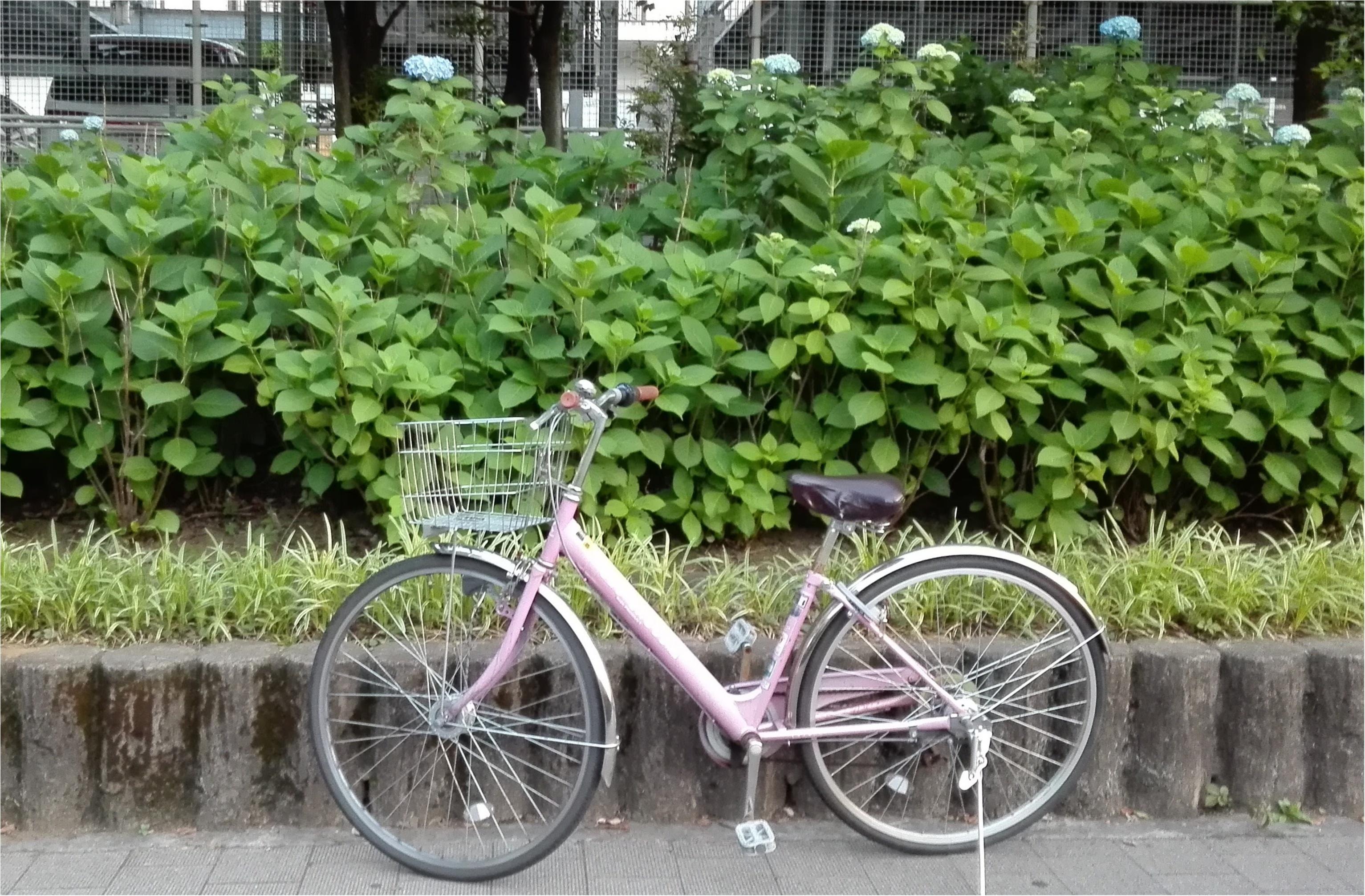 「ツール・ド・東北」に挑戦する私の、普段の自転車ライフ♪  道端で見つけた小さな梅雨【#モアチャレ あかね】_1