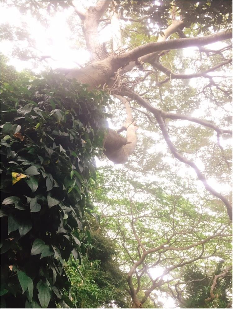 無人島【猿島】で日帰りBBQ♪♪フォトジェニックを楽しむ1日おすすめプラン☆_14