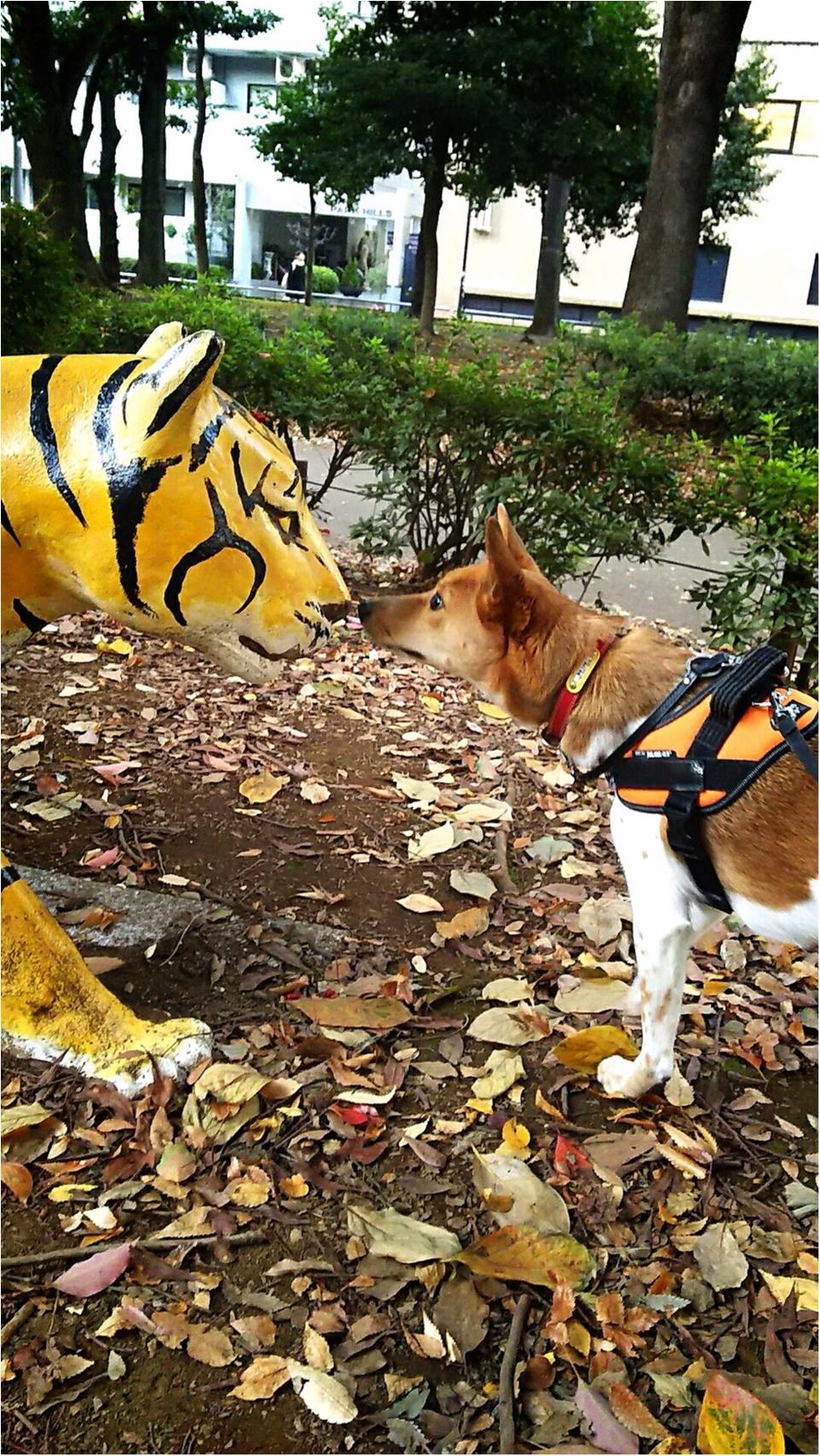 【今日のわんこ】魔法のキッス! トラに会ったこだまちゃん♡_1