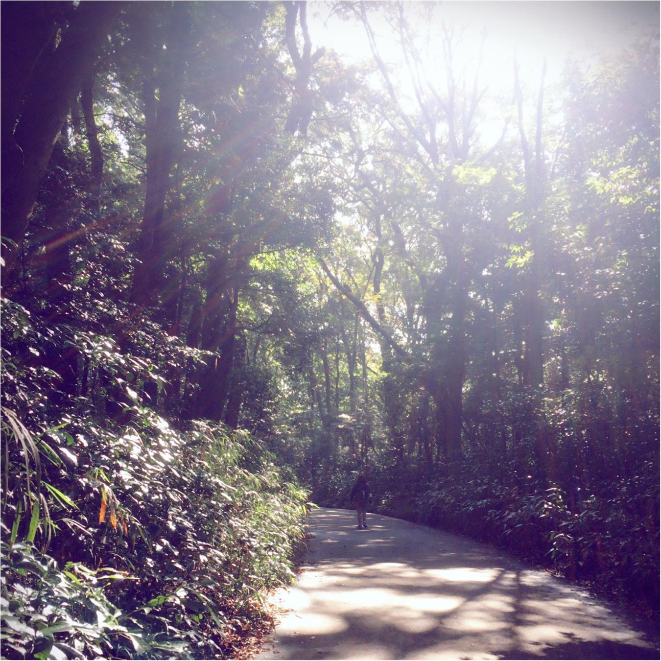 都内でたっぷり森林浴しよう!心からリフレッシュ♡in明治神宮_2