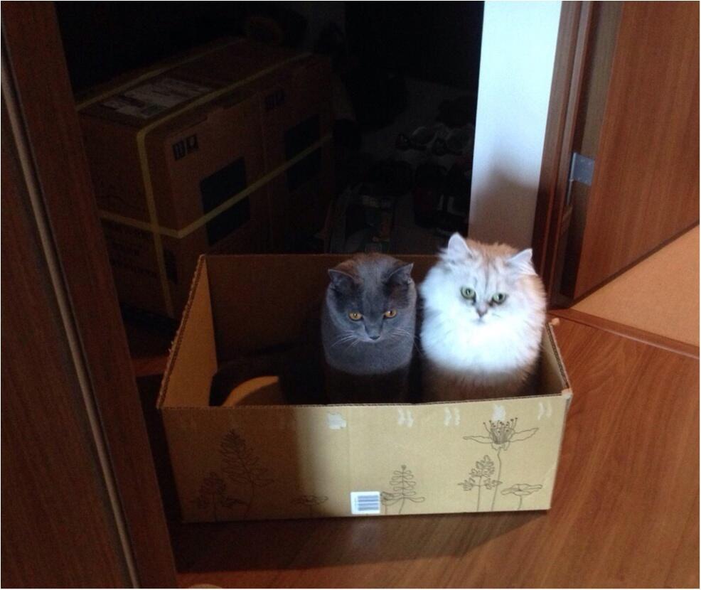 【今日のにゃんこ】お家で捨て猫!? チロルちゃんとアポロくん、ストライキ中_1