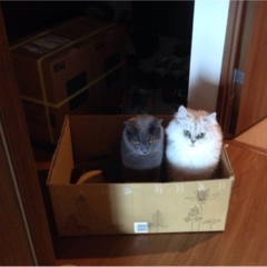 【今日のにゃんこ】お家で捨て猫!? チロルちゃんとアポロくん、ストライキ中