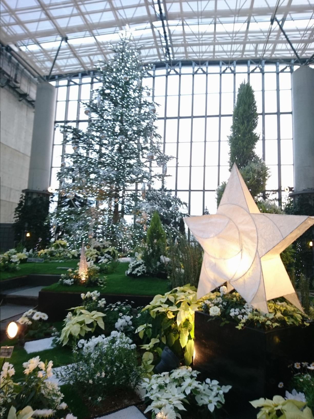 クリスマスシーズンに家族&カップルにお勧め!植物と光に彩られた奇跡の植物館_4