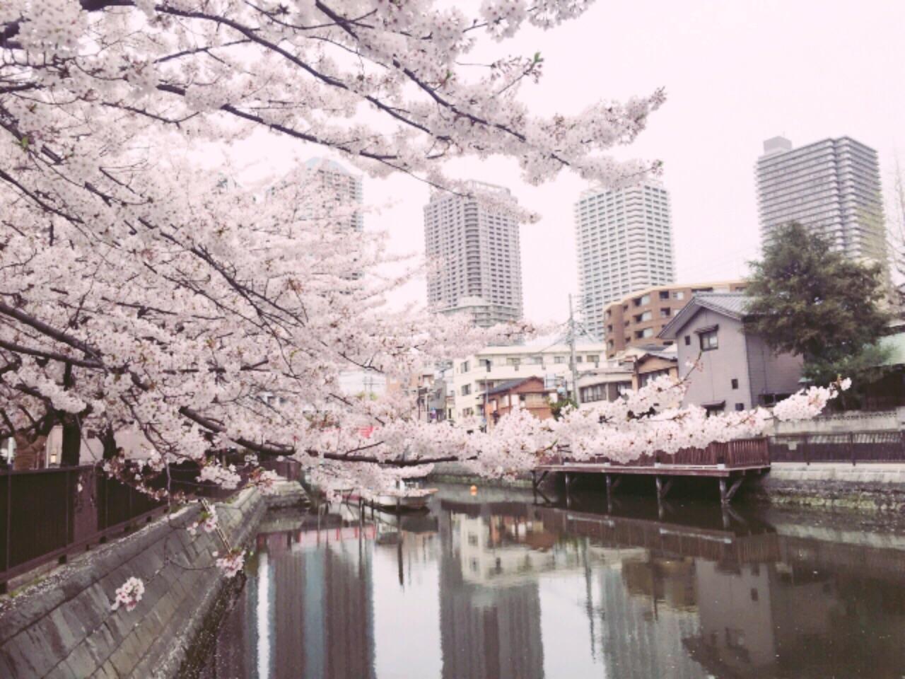 桜の命は短し、恋せよ乙女。_4