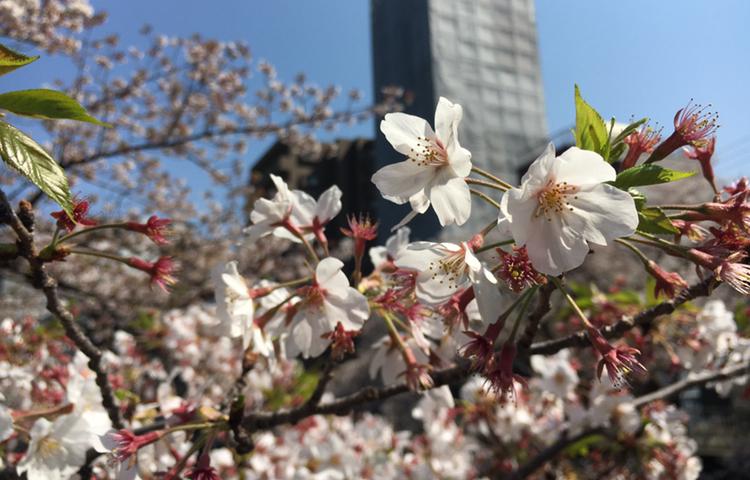 【歌舞伎のススメ*其の11】YouTubeで歌舞伎を全編無料配信?! 上演中止になった幻の三月歌舞伎がおうちで観られます♡_1