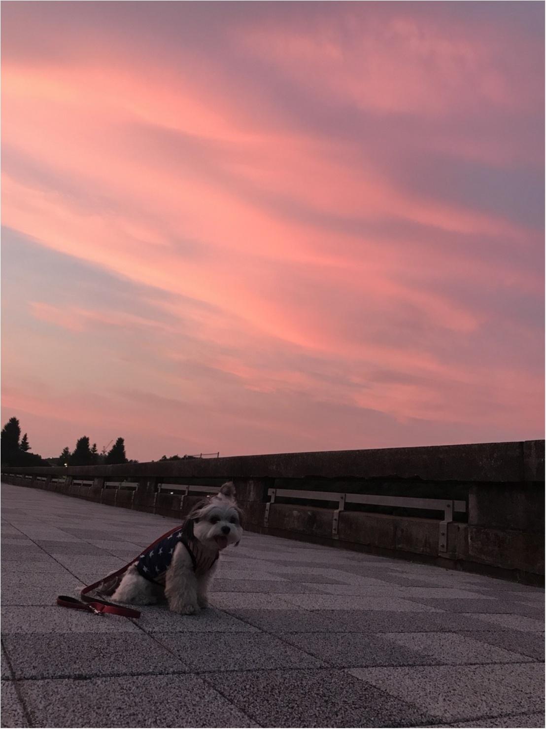【今日のわんこ】きれいな夕日と太郎くん_1