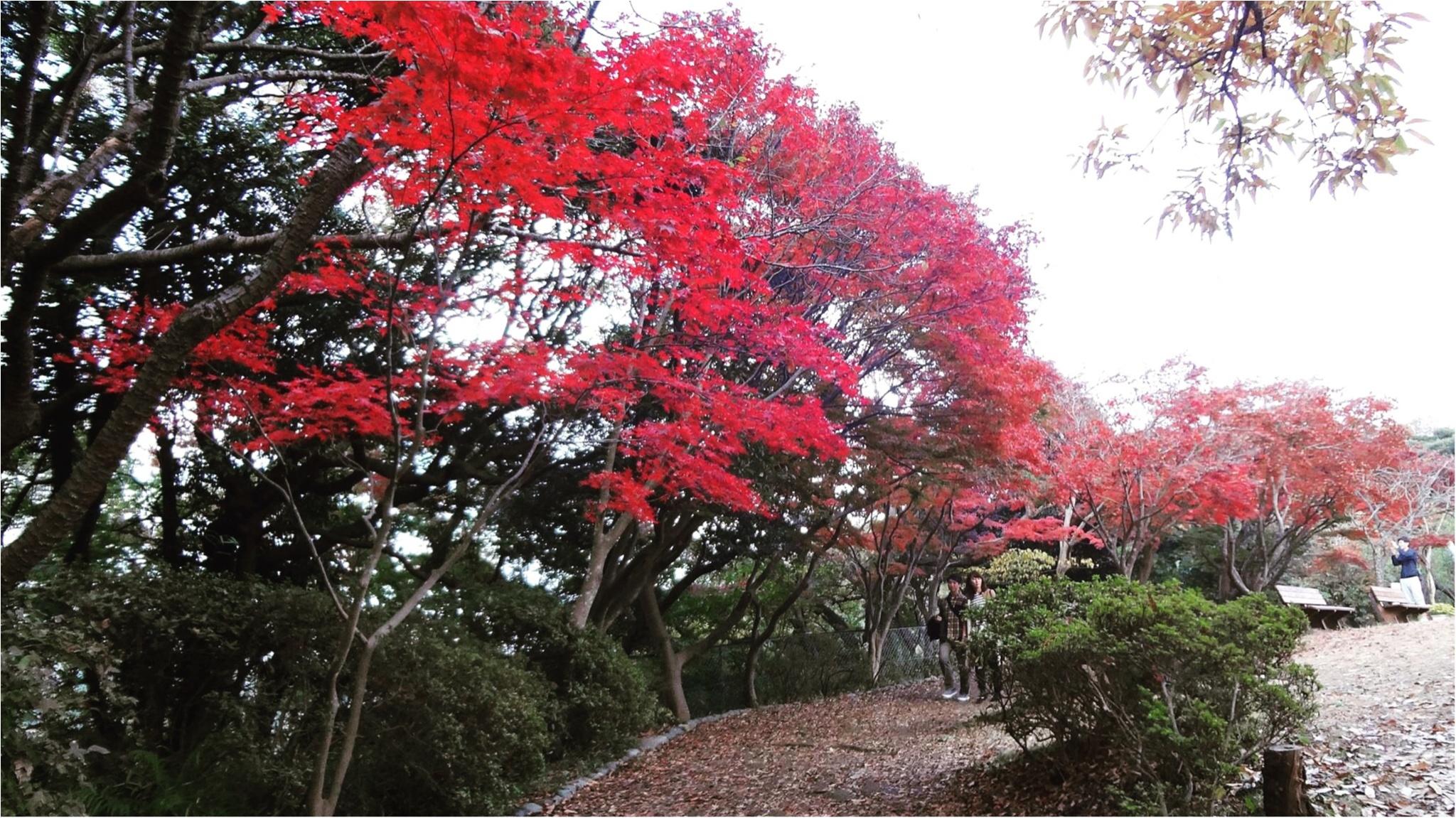 鎌倉にも紅葉の季節がやってきた♡11/20時点で見頃のオススメ紅葉スポットをご紹介✨≪samenyan≫_4