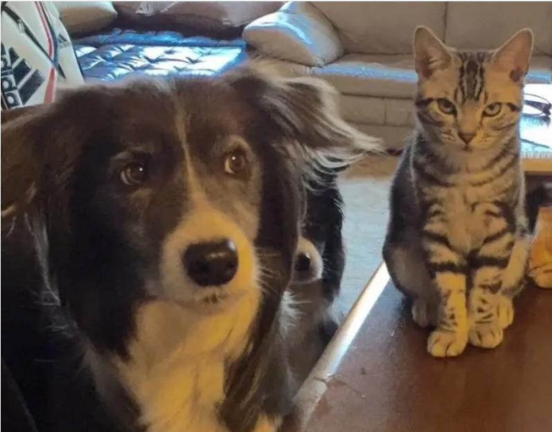 見て見ぬ振りをする犬。ボーダーコリーのメルちゃんと、それをにらむ猫・ソラくん
